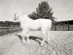 Marc De Blieck, The Best Horse of the Year 2009