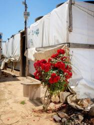 Henk Wildschut, Spray Rpse, Terbol, Lebanon