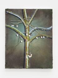 Arjan van Helmond, Mountain ash #1
