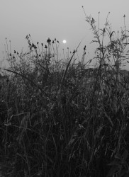Bryan Schutmaat, Moon, 2020 ( from County Road Series )