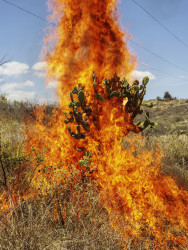 Pieter Hugo, Burning Bush. Oaxaca de Juárez