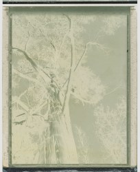Margaret Lansink, Polaroid mother nature IIV
