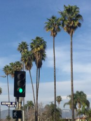 Juliette Blightman, 9th February - Palms, LA (with Hollywood sign)