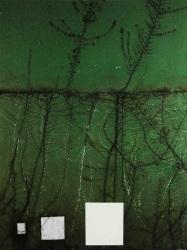 Sebastiaan Bremer, Tropicalia 2