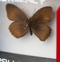 Leon van Opstal, Emergency pollination #62