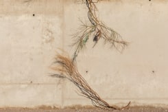 Natascha Libbert, Feather