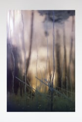 Dries Segers, Untitled