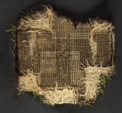 Diana Scherer, Exercises in Rootsystem Domestication #7