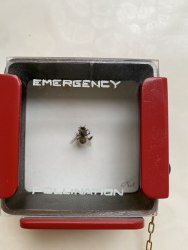 Leon van Opstal, Emergency pollination #69