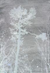 Sandra Kruisbrink, Pinus Sylvestris Barlindflaten 2