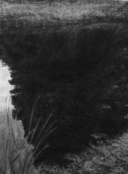 Renie Spoelstra, Reflected (Chestnut Tree)