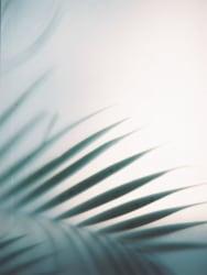 Cleo Goossens, Palm, Lanzarote