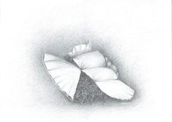 Theo Jansen, Ader met vleugels
