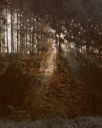 Matthieu Litt, Untitled #87 from Oasis