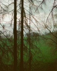 Matthieu Litt, Untitled #71 from Oasis