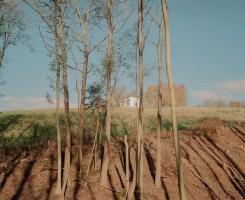 Matthieu Litt, Untitled #91 from Oasis
