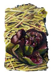 Mathieu Cherkit, Lactuca sativa