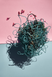 "Thirza Schaap, beehive, from the series ""Plastic Ocean"""