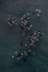 "Thirza Schaap, waterlilies too, from the series ""Plastic Ocean"""