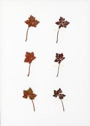 Anne Geene, Eeuwig Herbarium  #39
