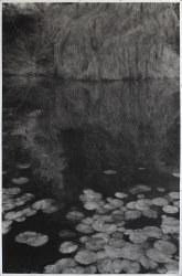 Renie Spoelstra, Reflected Tree #4