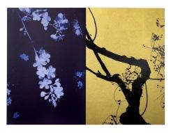 Paul Cupido, Blue-Gold