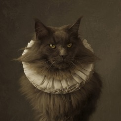 Marie Cecile Thijs, Cat with White Collar V