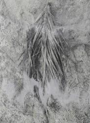Ilanit Illouz, Palm Branch #4