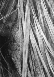 Ilanit Illouz, Palm Branch Detail #5