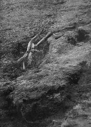 Ilanit Illouz, Quicksand
