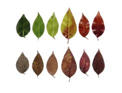 Anne Geene, Eeuwig Herbarium #44