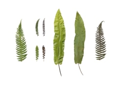 Anne Geene, Eeuwig Herbarium #43