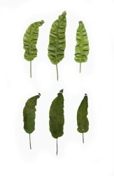 Anne Geene, Eeuwig Herbarium #46