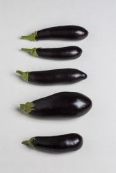 Uta Eisenreich, 76. Typology of eggplants