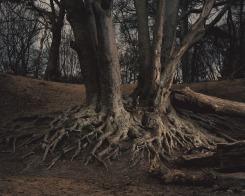 Daan Paans, Forest Spirit