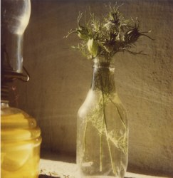 Robby Müller, Bottle with love-in-a-mist, Lindos, Rhodes, August