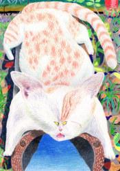 Johan Kleinjan, Coolcat