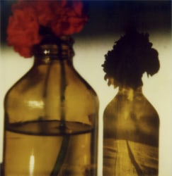 Robby Müller, Red geranium in bottle with shadow, La Palma, September - October