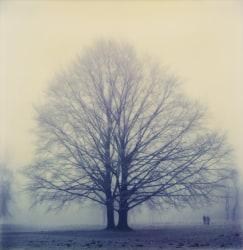 Robby Müller, Winter Tree, Englischer Garten, Munich