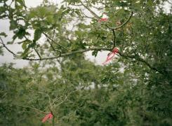 Borealis: Halfway, Jeroen Toirkens