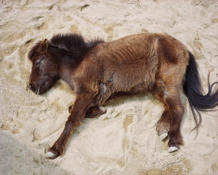 Charlotte Dumas, Horse in sand, Imabari