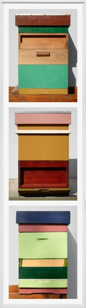 Scheltens & Abbenes, Beehives: Green, Wood & Brown - Wood, Ocre, White & Pink - Pink, Green & Blue