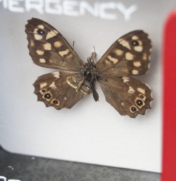 Leon van Opstal, Emergency pollination #50