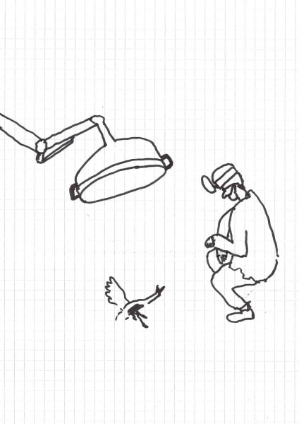 Dick Verdult, Dibujos Pasajeros (Kijk nou gans!)