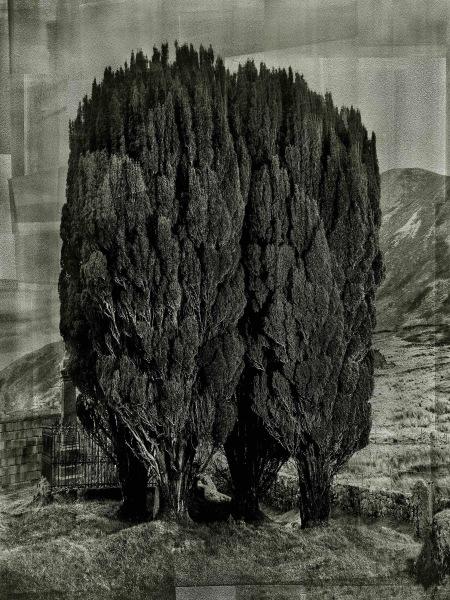 Albert Watson, Trees, Isle of Skye, Scotland