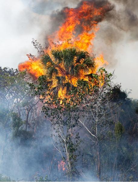 Natascha Libbert, The house is on fire