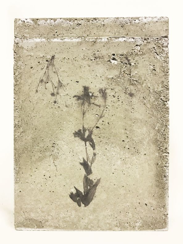 Flower collage in a box of concrete with aceton print