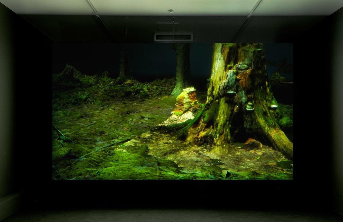 Forest in Location / FOAM Amsterdam, ,
