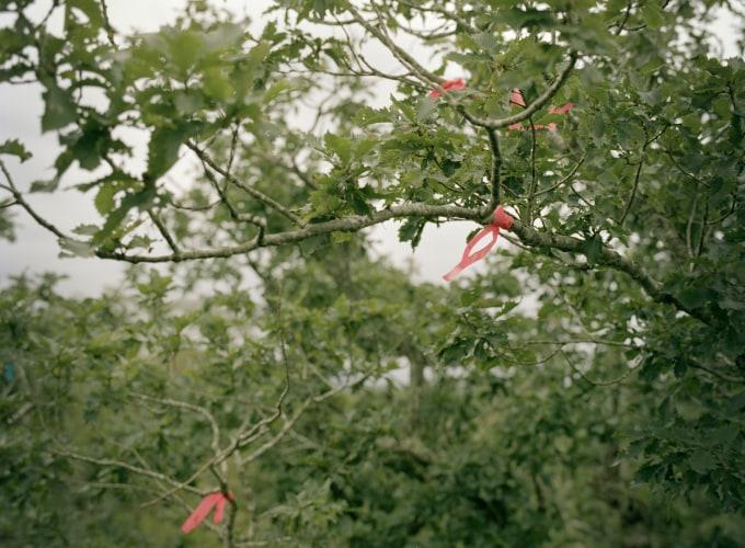 Borealis: Halfway, Jeroen Toirkens,