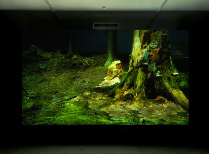 Forest in Location / FOAM Amsterdam, ,